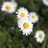 daisy test K02 f/2.8