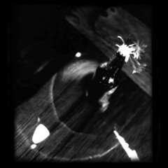 lost coast still life (B.S. Wise) Tags: california flowers light blackandwhite bw abstract art photography photo bottle driftwood shack flickrcentral bradwise lostcoast bradswise darknessandlight dreamalittledream flickraddicts abstractreality whiteandblackphotography filmisnotdead incoloro iloveblackandwhite trashbit bswise trashbitreloaded abstractphotographyartandmore blackwhitepassion blackwhitephotoszapraszamchallengeofthemonth poeticpictures