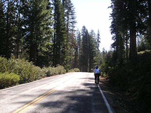 Tioga Road
