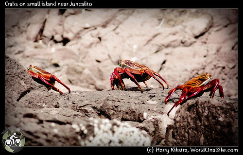 Crabs on small island near Juncalito