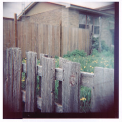 walking down the road, looking at the things (sami k (the k stands for potassium!)) Tags: travel portrait house 120 film grass yard fence mediumformat spring weeds lawn dandelion diana analogue agfa stroll neighbourhood wander 160