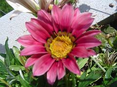 As minhas Flores