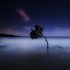 Silent Night (Garry - www.visionandimagination.com) Tags: nightphotography tree night photography flickr alone photographers mangrove silence single passion getty bayside moment tranquil gettyimages solitarytree stockphotography silentnight platinumphoto wwwvisionandimaginationcom