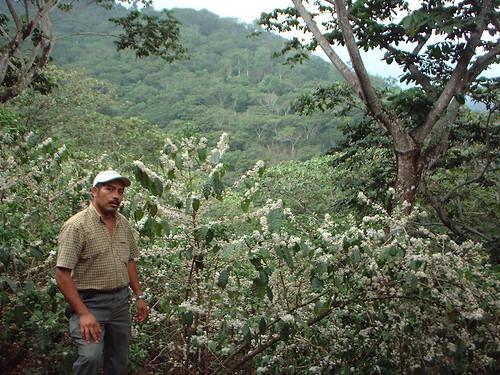 Los Amates El Salvador Francisco Viana (manager)