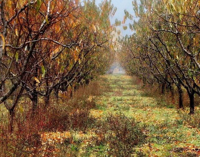 Melrose Orchard