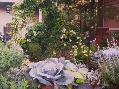 garden full of flowers and ornamental cabbage plants
