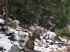 Snow along our trail...what does t…