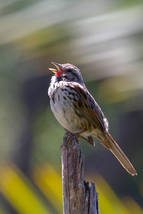 051111_bird08