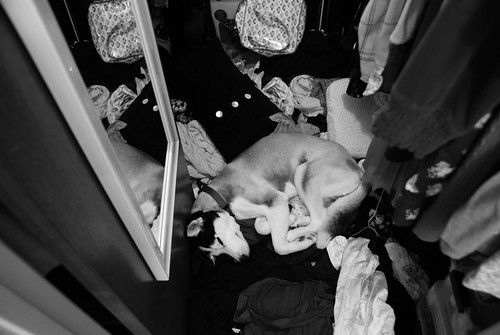 bowie sleeping in closet by ceck0face