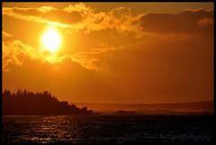 SOOC Sunset (Dave the Haligonian) Tags: ocean sunset sea sky sun canada bird water clouds coast novascotia seagull atlantic maritime sooc lowerprospect dsc6247jpg soocsunset