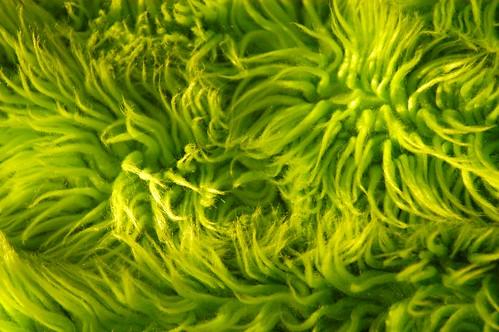 lime green shag rug texture