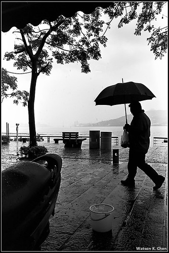 20090307-雨中.jpg