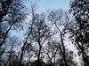 Skyscrapers (asis k. chatt) Tags: trees nature jungle bengal naturephotography naturalpatterns naturescene naturalharmony naturalsilhouette