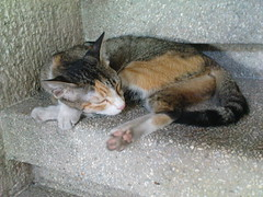 sleeping cat, on the stairs