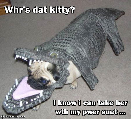 Whr's dat kitty?- LOLDogs