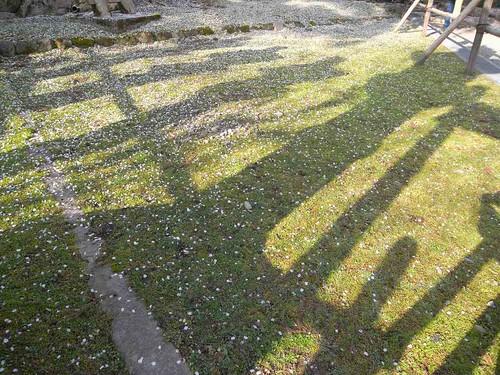 09-04-05【桜】@氷室神社-05