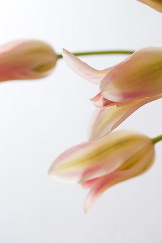 0903 flowers #8