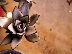 Lie to me (o Flor de arena (or sand flower))
