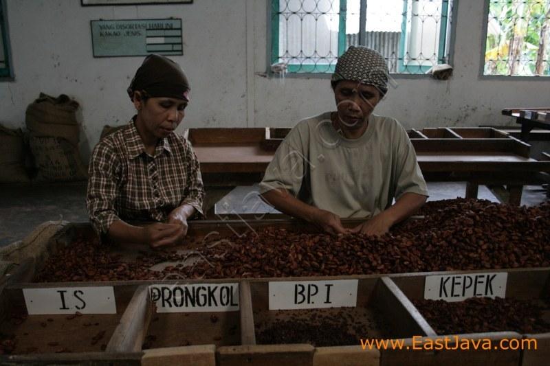 Ngrangkah Pawon Coffee Industry - Kediri