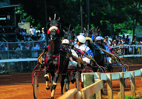 Neshoba County Fair Harness Races - Philadelphia, Mississippi by visitmississippi