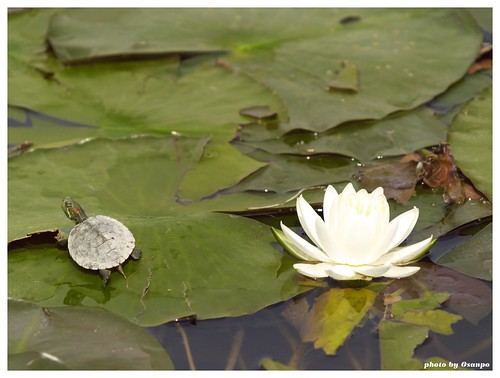 Water Lily 20090511 #02