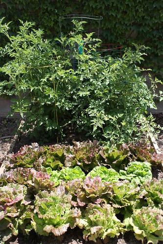 gardening 003.JPG