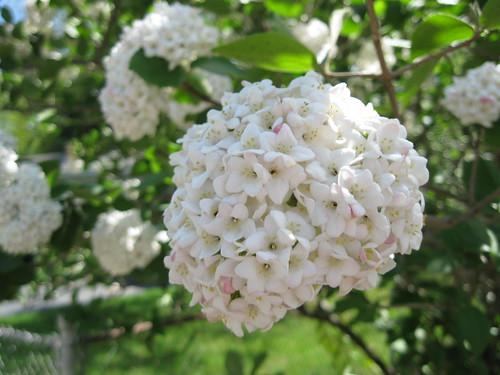 spring 2009 041