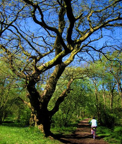 Grand Mugdock tree
