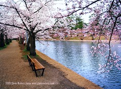 Sakura Sakura  (Hirosaki Japan).  Glenn Waters. (Explored)  5,200 visits to this photo. Thank you. (Glenn Waters in Japan.) Tags: park water japan nikon explore aomori   sakura cherryblossoms hirosaki moat japon    explored  d700  nikond700 homersiliad  glennwaters nikkorafs1424mmf28 travelsofhomerodyssey