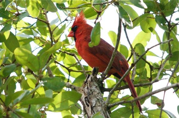 cardinal_best_0122
