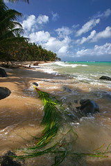 Swept out to Sea (eliciaire) Tags: ocean sea sky seascape beach palms islands sand palmtrees beaches nicaragua caribbean atlanticocean tides reefs centralamerica caribbeansea cornislands littlecornisland caribbeanislands vivatravelguidesnicaragua