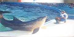 Ricardo training dolphin (ABC Dolphin Trainer Academy) Tags: dolphin trainer trainingsession animaltraining dolphintrainer positivereinforcementtraining entrenamientorefuerzopositiva entrenadordedelfines