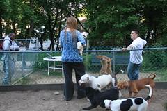 Dog Rape 3 (Venessa Nina) Tags: dog dogs photography idea bad run rape queens breeding stupid mating nina idiots dogrun morons pitbulls venessa fivefootmohawk venessaninaphotography