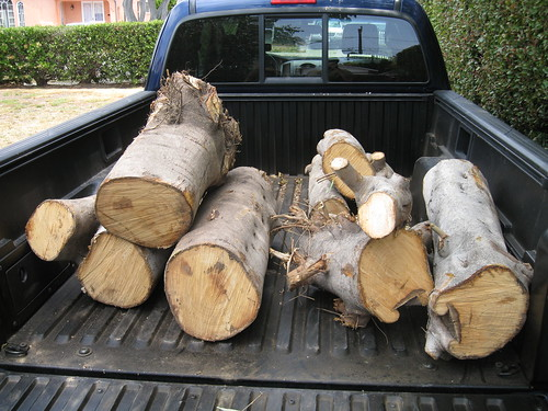 more fig logs in my truck
