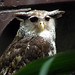 Forest Eagle Photo 10