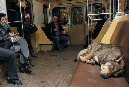 cachorros no metro de Moscow