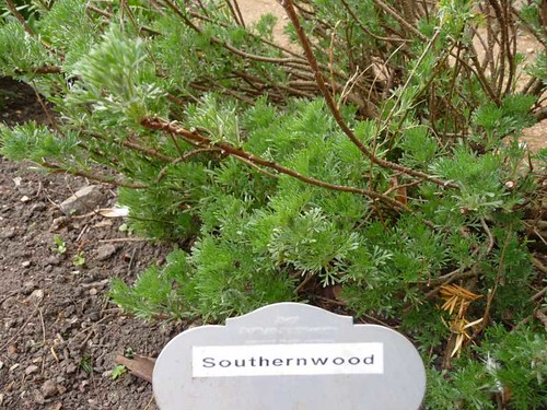 southernwood-petersfield-physic-