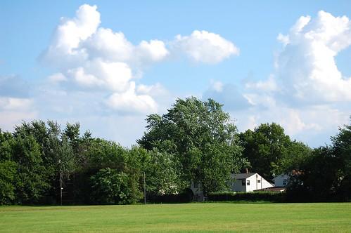 31/365 Summer Field