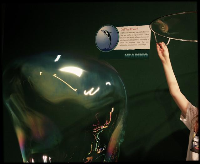 2009  august porpoise bubble