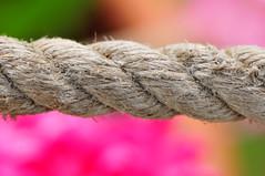 Renkli hayat urganı (Atakan Eser) Tags: spring bahar çiçek ilkbahar ngbb kartpostal dsc1526 nezahatgökyiğitbotanikbahçesi