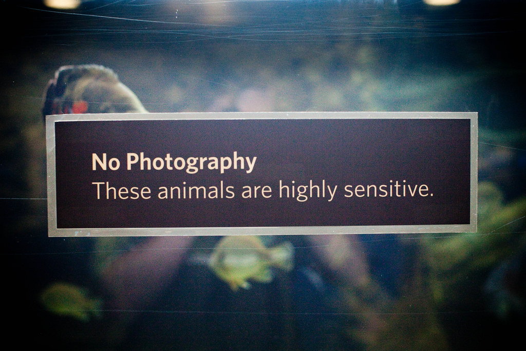 No Photography, These Animals Are Highly Sensitive