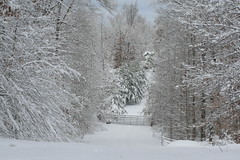 Gate To Nuckols' Property (joanmazza) Tags: winter snow virginia 2009
