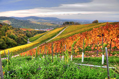 Autumn Vineyards (Habub3) Tags: travel autumn panorama nature colors germany landscape deutschland photo vineyard nikon herbst natur autumncolors vineyards landschaft farben weinberg d300 herbstfarben mywinners theunforgettablepictures goldstaraward autumnvineyards habub3