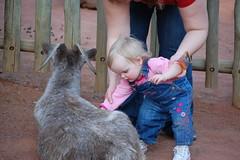 Petting a goat (zmnhhc) Tags: louisvillezoo