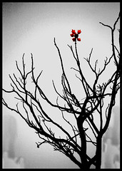 One | Hope (Pixychik) Tags: autumn cactus bw india flower tree canon dark rebel hope one spring desert solo single dried spines thorn barren hpc thorny fleshy rebellious
