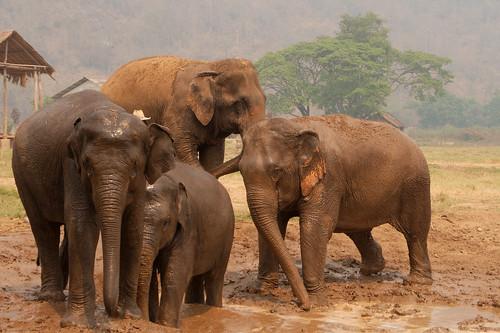 Elephant Nature Park-104