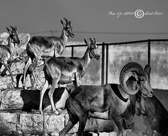 In the same way (NOOF BINT NASSER) Tags: trip white black way lens nikon with d used same and 2009 60  association in 70300      ofphotography   zoom70300         60