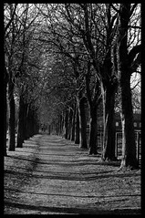 Allee (knipsknips) Tags: bw allee
