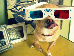 Floyd in 3D! (EllenJo) Tags: dog pet chihuahua tongue vintage 3d retro disguise floyd 2009 3dglasses digitalimage threeringcircus lickinghischops 3ringcircus ellenjo editedwithpicnik ellenjoroberts dogsindisguise march2009 paintingbyalicedubois floydatthemovies isthismoviein3d nobutyourfaceis floydin3d artbyalicedubois march13april21jeromeartistscooperativegallery2010