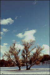 The Dreaming Tree (Frkenfryd) Tags: old blue sky sun snow tree clouds dreaming trondheim festning nikond40 frkenfryd